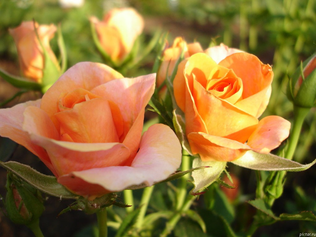 flowers578