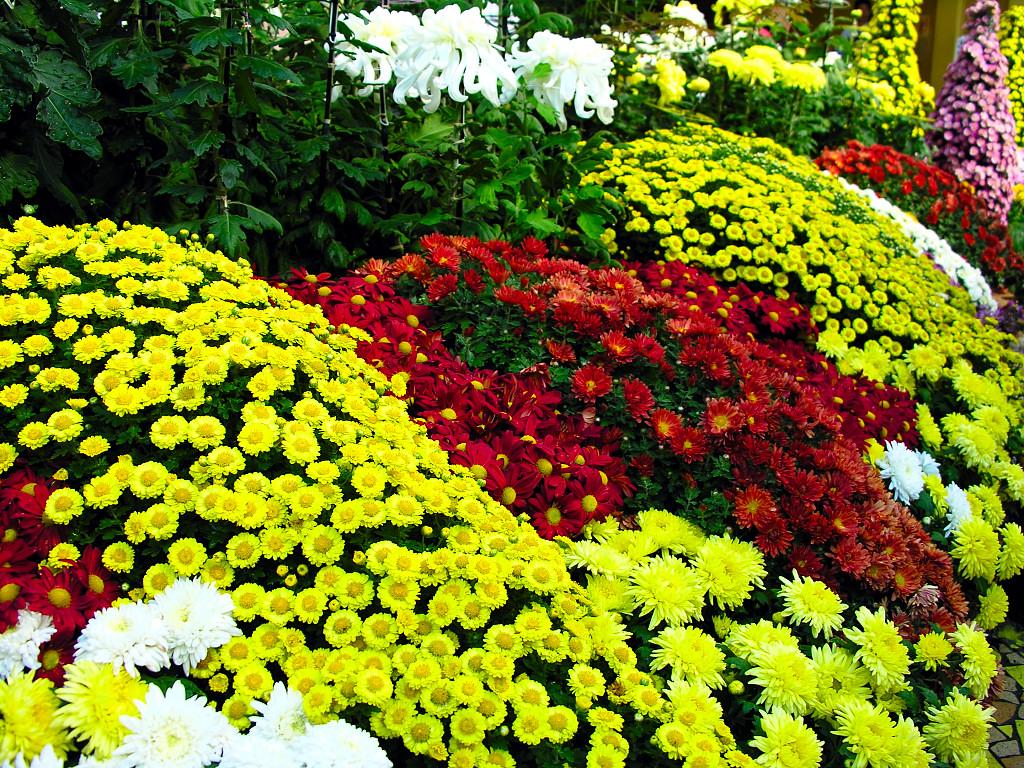 Уличные цветы которые сажают осенью 9
