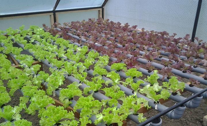 Выращивание растений под по 915