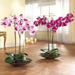 Можно ли вырастить орхидею?
