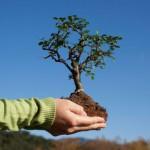 Какие деревья можно сажать осенью?