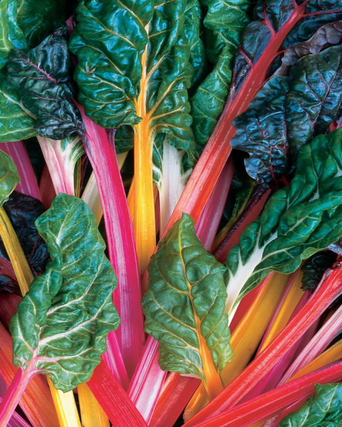 (GARDEN19 Decker) Bright Lights Swiss chard. Credit All America Selections.