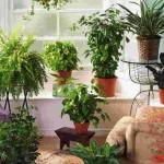 Как выбрать лучшие комнатные растения для дома