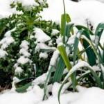 Что можно сажать под зиму ?