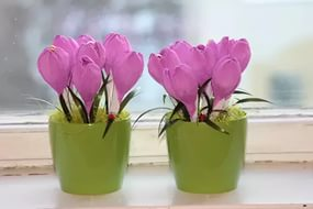цветы к 8марта (16)