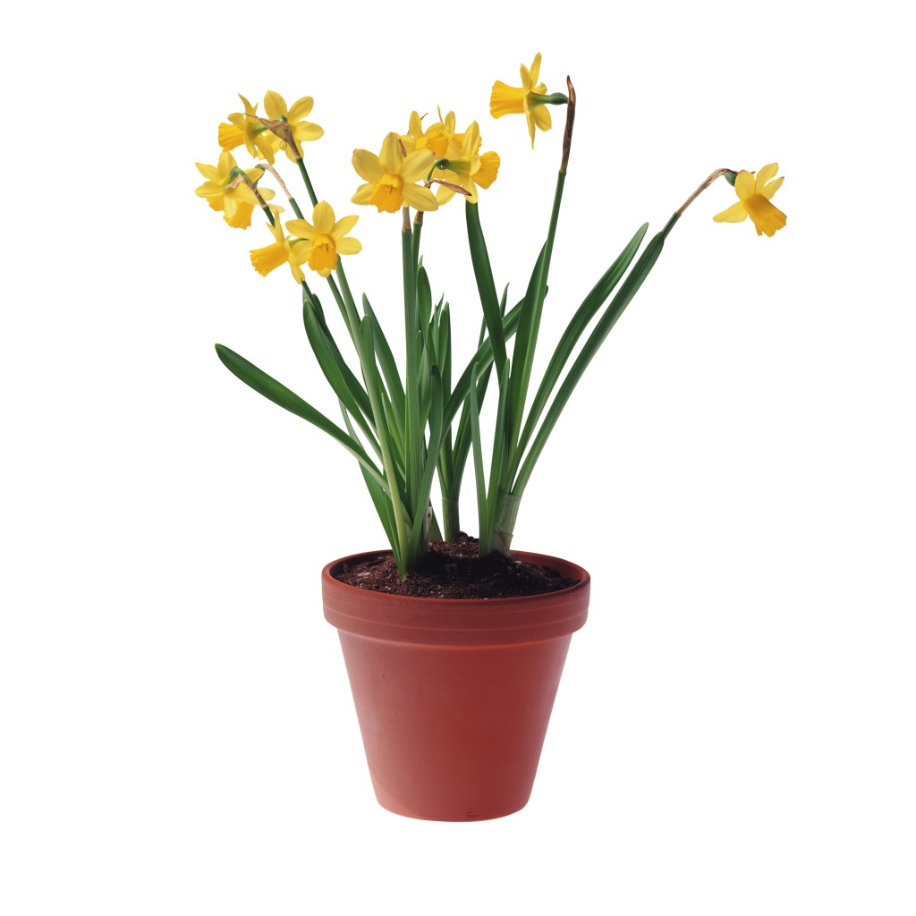 цветы к 8марта (3)