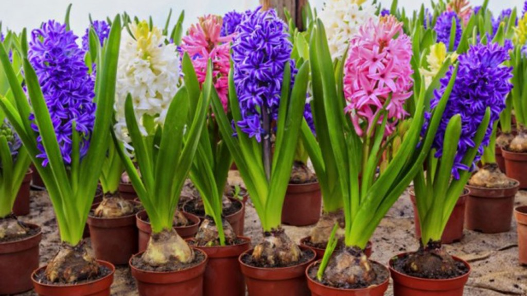 цветы к 8марта (6)
