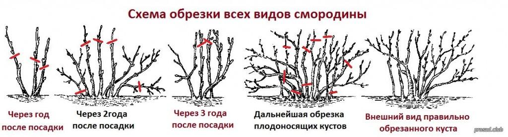 Обрезка кустарников (1)