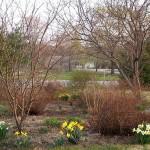 Обработка плодовых деревьев и кустарников весной