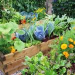 Что с чем сажать. Совместные посадки. Севооборот овощных культур