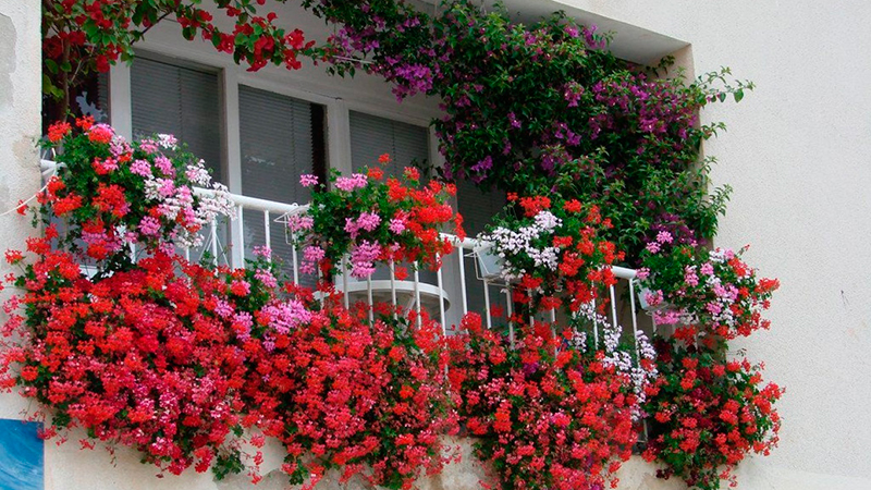 Цветник на окне своими руками